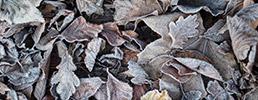 frozen-brown